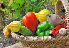 Colorful vegetables in basket Royalty Free Stock Photo