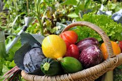 Colorful vegetables Stock Photos