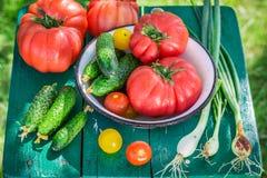 Colorful vegetables in sunny garden Stock Photos