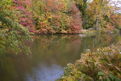 Colorful vegetation in Central Park Royalty Free Stock Photography