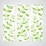 Colorful Vertical Set Of Floral Banners . Modern Stock Photos