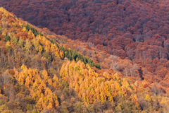 Colorful vibrant autumn trees in the forest. Mountains of Lugano Stock Photography