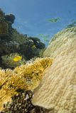 A colorful  and vibrant tropical reef scene. Stock Photo