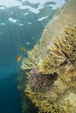 A colorful  and vibrant tropical reef scene. Stock Image