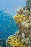 A colorful  and vibrant tropical reef scene. Royalty Free Stock Image