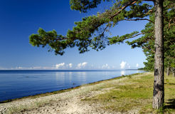 Colorful view on beach of Riga gulf, Latvia Royalty Free Stock Images
