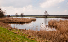 Colorful view at a Dutch nature reserve Royalty Free Stock Image