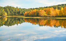 A colorful view of the forest in autumn Stock Photography