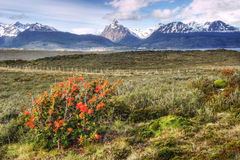 Colorful view in Tierra del Fuego, Argentina Stock Image