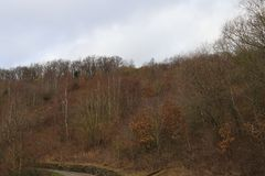 Colorful view at various trees on a mild winters day, Manubach area, Germany. Scenic view at hills and forrest during mild winter season in Germany at Manubach Royalty Free Stock Photography