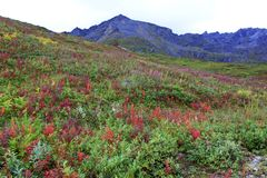 Views from Hatcher Pass. Colorful views of Hatcher Pass in Alaska, near Palmer and Wasilla stock photo