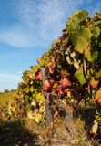 Colorful vineyard stock image