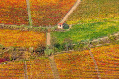 Colorful vineyards on the hills in Piedmont, Italy. Royalty Free Stock Photography