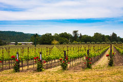 Colorful vineyards in Napa Valley,California Royalty Free Stock Image
