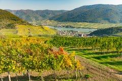 Colorful vineyards near Spitz an der Donau in autumn, blue sky. Wachau, Lower Austria royalty free stock image