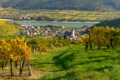 Colorful vineyards near Spitz an der Donau in autumn, blue sky. Wachau, Lower Austria stock images