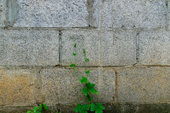 Colorful vintage stone wall. Royalty Free Stock Photos