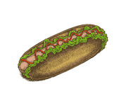 Colorful vintage style hand drawn hot dog. Stock Image