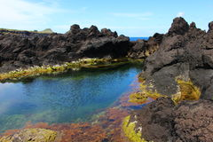 A Colorful Volcanic Tidal Pool. Colorful growth in a tidal pool amid rough igneous rocks on the coast of Terceira, one of the islands of Portugal's Azores Royalty Free Stock Photo