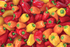 Colorful Wall to Wall Sweet Peppers Royalty Free Stock Image