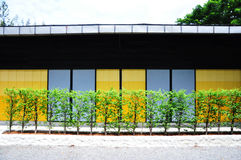 Colorful wall. The colorful of yellow and blue wall with trees stock photos