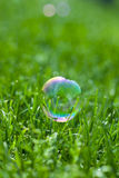 Colorful water bubble on the green grass Stock Photos
