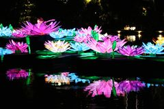 Colorful water lilies in the pond in singapore Asia royalty free stock photos