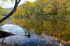 Colorful water reflection on the Pigeon River in fall. Stock Image