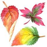 Colorful watercolor autumn leaves. Leaf plant botanical garden floral foliage. Isolated illustration element. stock illustration