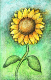 Colorful watercolor and ink sunflower illustration Royalty Free Stock Photo