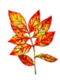 Colorful watercolor  leaf Stock Photos