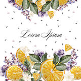 Colorful watercolor post card or wedding invitation. With lavender flowers, anemones, and orange fruits. Royalty Free Stock Image