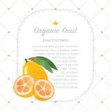 Colorful watercolor texture nature organic fruit memo frame. Kumquat stock illustration
