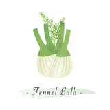 A Colorful watercolor texture vector healthy vegetable fennel bulb Stock Images