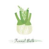 A Colorful watercolor texture vector healthy vegetable fennel bulb. Colorful watercolor texture vector healthy vegetable fennel bulb Stock Images