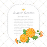 Colorful watercolor texture vector nature botanic garden memo fr. Ame asteraceae orange daisy Royalty Free Stock Images