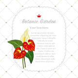 Colorful watercolor texture vector nature botanic garden memo fr. Ame red anthurium flamingo flower Royalty Free Stock Images