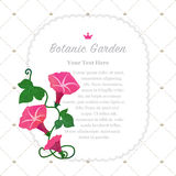 Colorful watercolor texture vector nature botanic garden memo fr. Ame red morning glory Royalty Free Stock Image