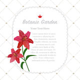 Colorful watercolor texture vector nature botanic garden memo fr. Ame red tiger lily Stock Photography