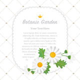 Colorful watercolor texture vector nature botanic garden memo fr. Ame white daisy Royalty Free Stock Photography