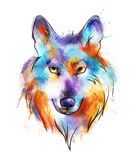 Colorful watercolor wolf's head Royalty Free Stock Image
