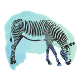 Colorful watercolor zebra cover. Royalty Free Stock Photography