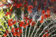 Colorful watering background Stock Photos
