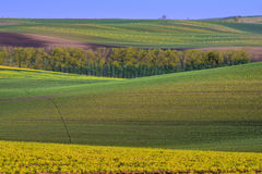 Colorful wavy hills on Moravia Royalty Free Stock Photo