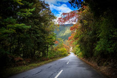 Colorful way Stock Image