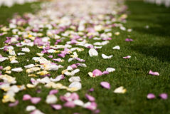 Colorful wedding rose petals Stock Photography