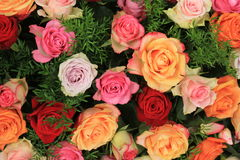 Colorful wedding roses Royalty Free Stock Photos