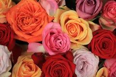 Colorful wedding roses Stock Photo