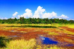 Colorful wetland. The big wetland is important for animal. Ex. Migrate bird Royalty Free Stock Photos