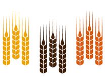 Colorful wheat ears Stock Images